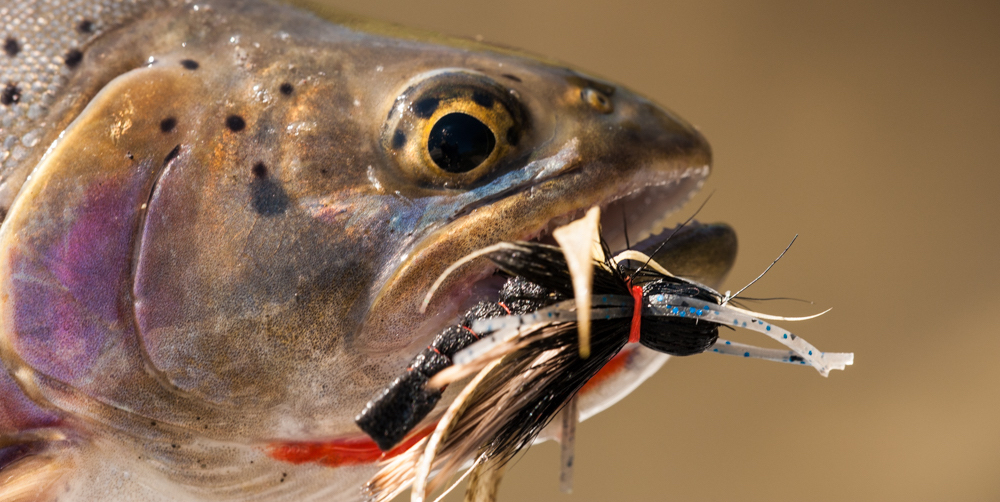 Yellowstone Cutthroat Trout Salmon Fly