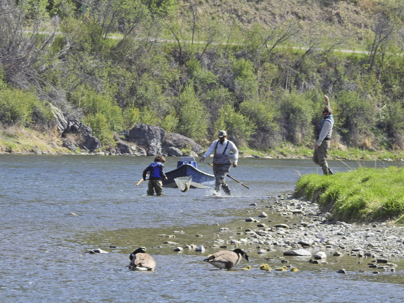 Diy guide to fly fishing the missouri river in montana · diy fly.