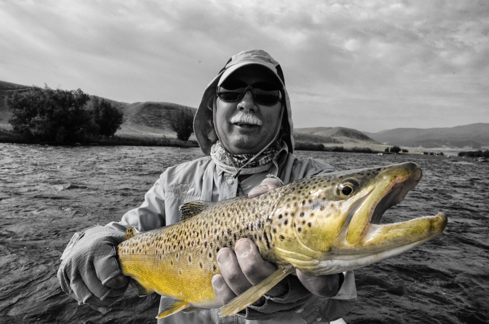 Madison River Brown trout on a guided fly fishing trip with Fins & Feathers of Bozeman's fly fishing guide service.