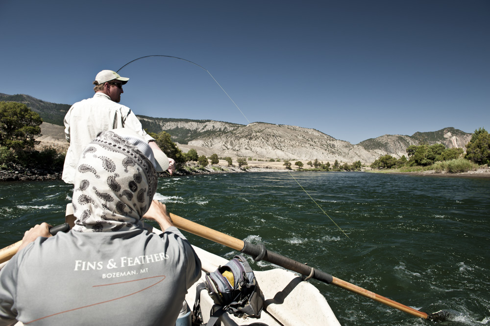 Fly Fishing the Yellowstone River with Fins & Feathers of Bozeman fly fishing guides.