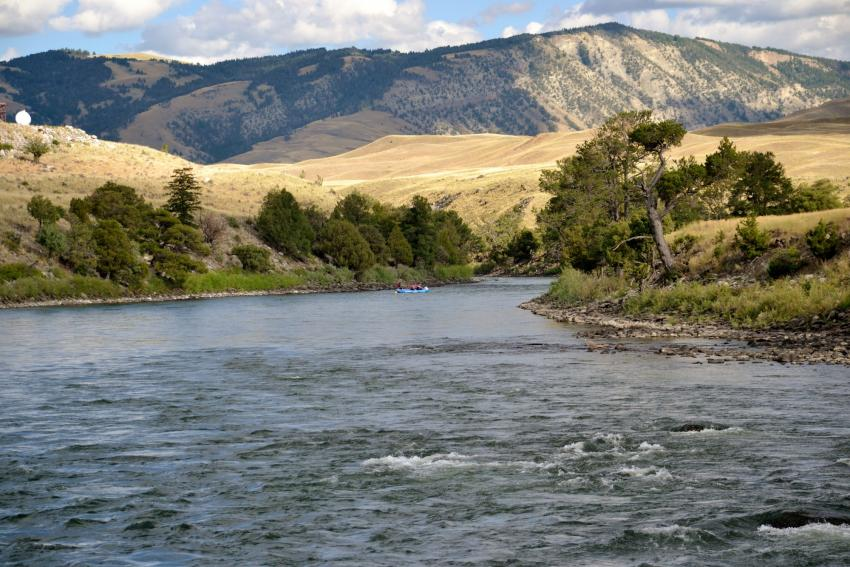Yellowstone River fly fishing near Yankee Jim Canyon with Bozeman fly fishing outiftter and fly shop, Fins & Feathers.