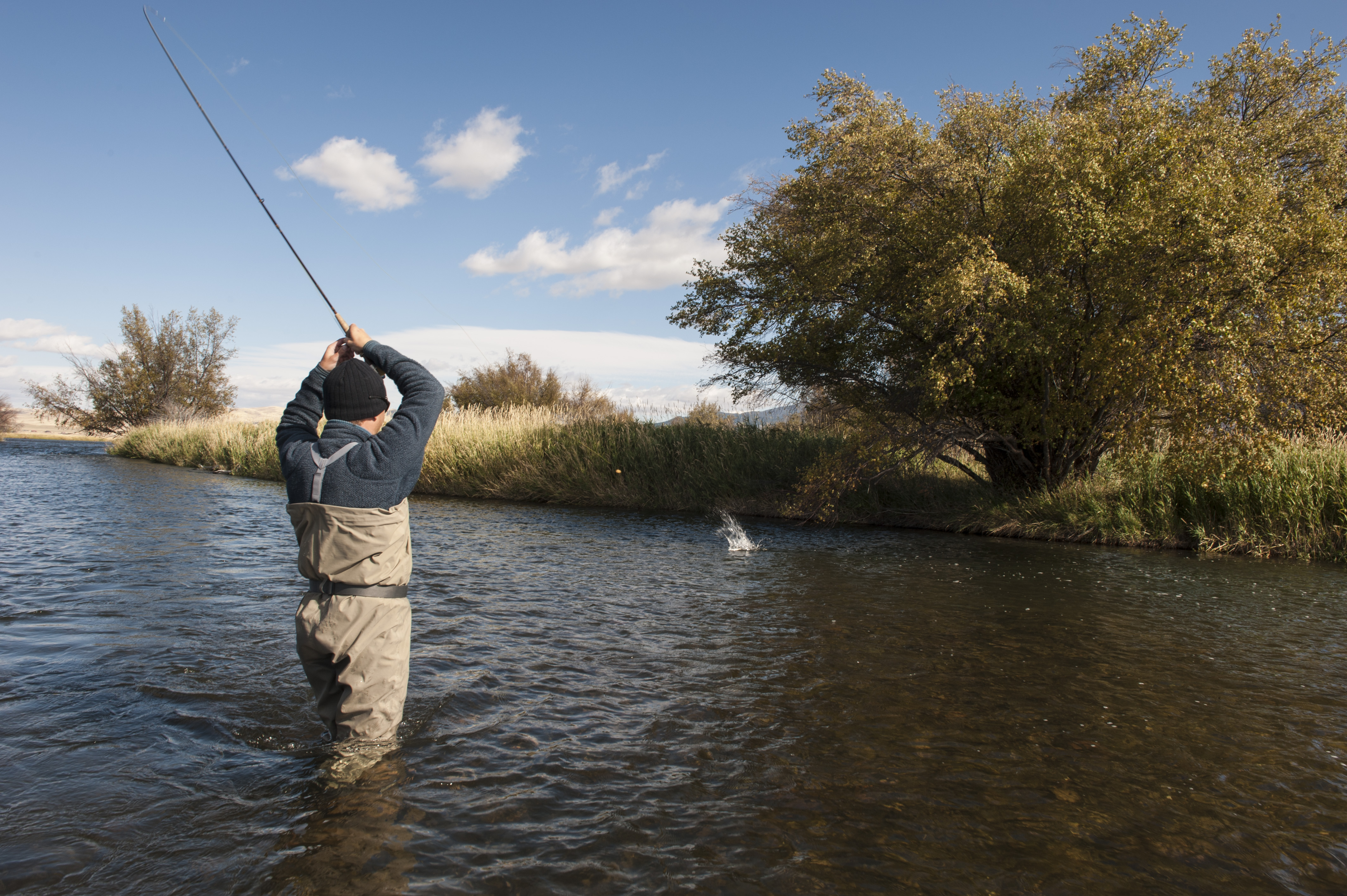 Fly fishing the madison river below ennis for Madison river fly fishing